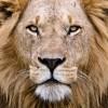 Je veux continuer à vivre de facon Royal comme un Lion !