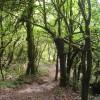 Voulez-vous découvrir la méditation vipassana ?